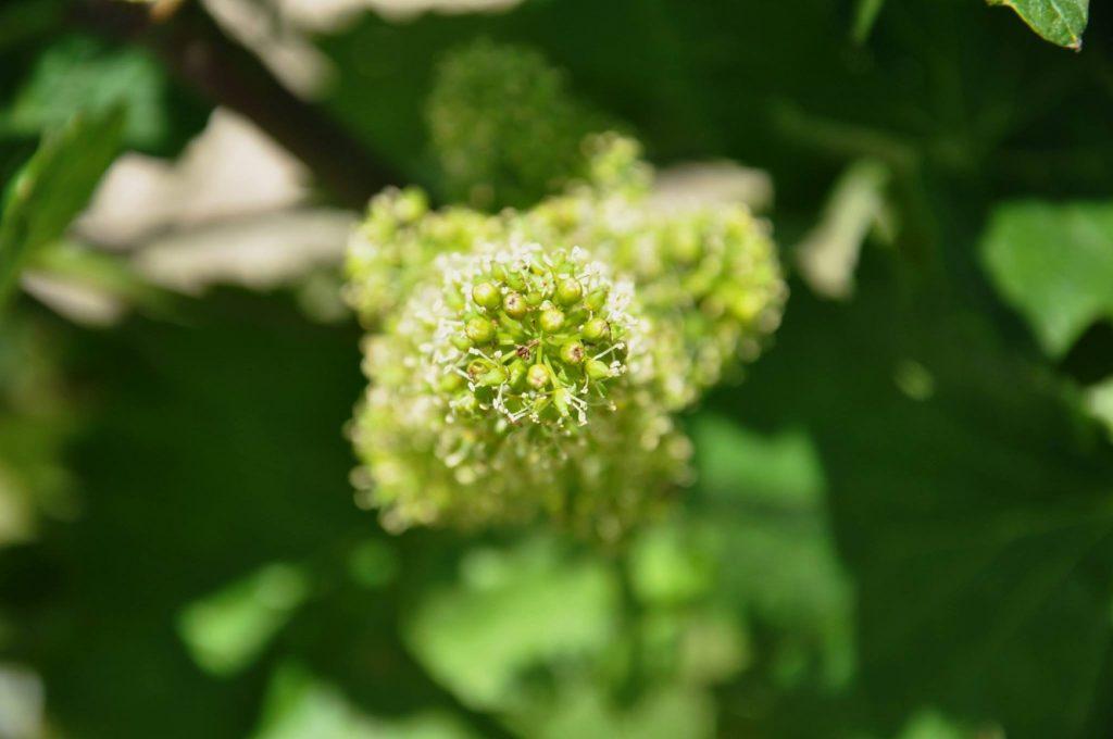 Die Blüte - jedes Jahr auf's Neue faszinierend
