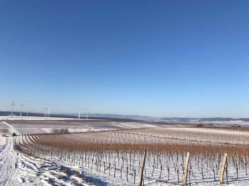 Blick ins Blaufränkischland von der Lage Hochberg