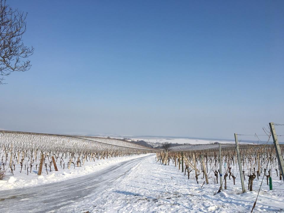 Blick auf die Top-Lagen Hochbaum und Siglos im Winter